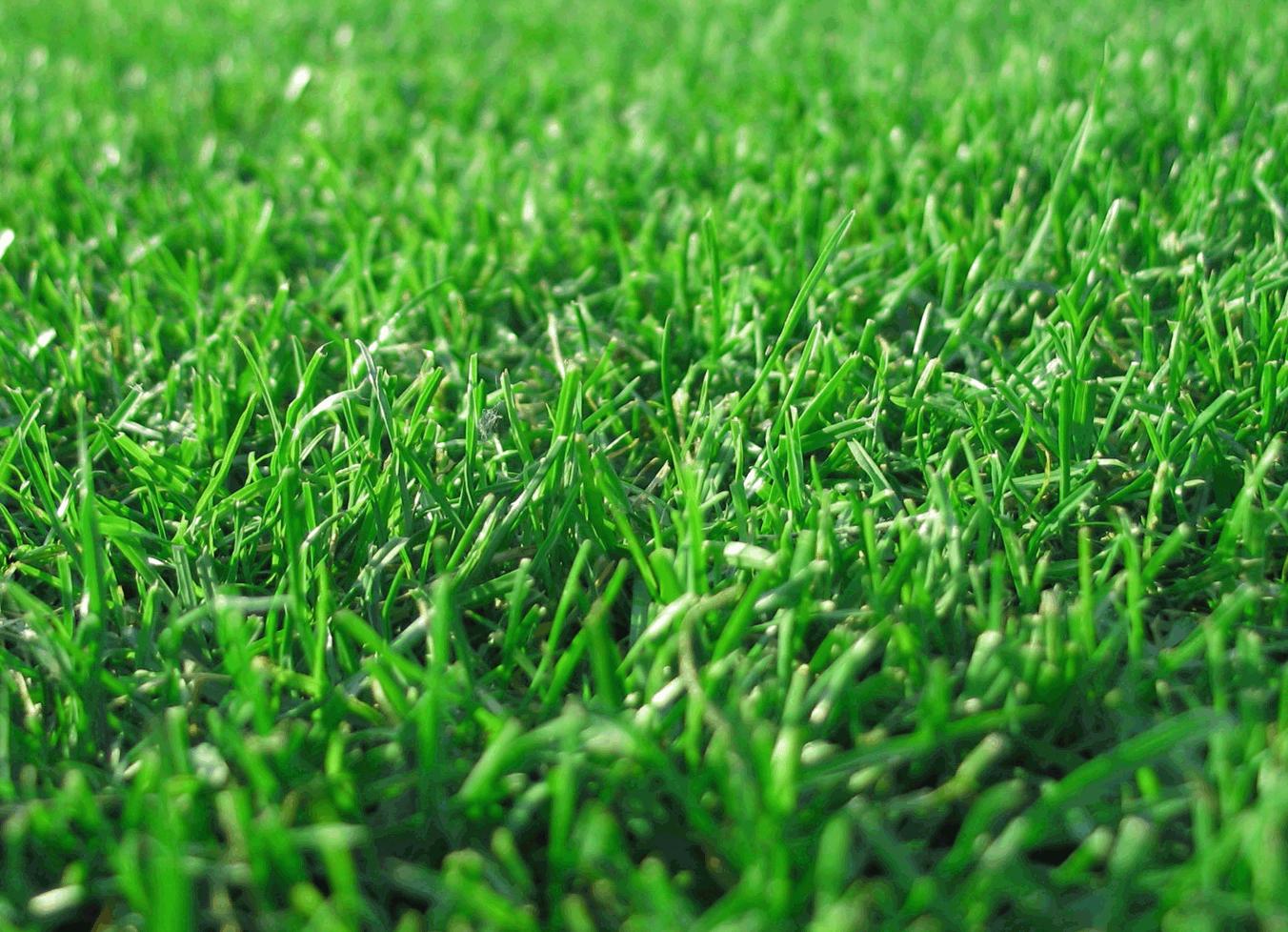 Piękny trawnik- efekt nawożenia