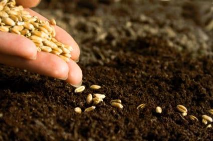 Siew nasion roślin jednorocznych
