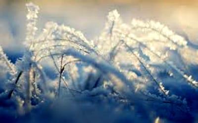 Zabezpieczanie trawnika przed zimą