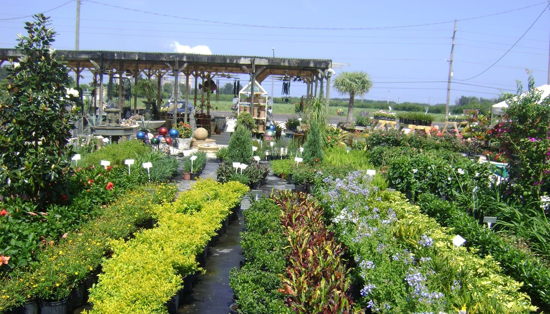 zakup roślin