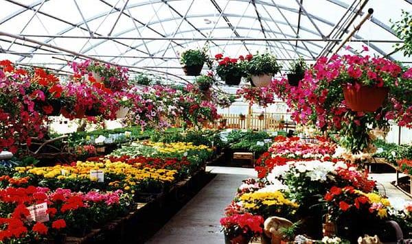 Zakup roślin do ogrodu
