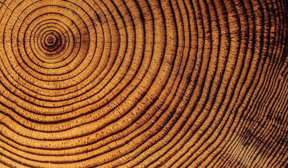 drewno w ogrodzie