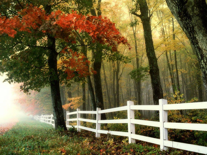 jesienny konkurs