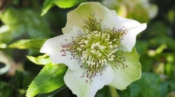 byliny kwitnące w marcu