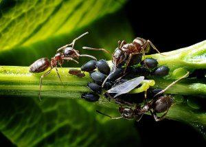 ants-1271768_960_720