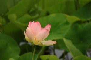 PoradyOgrodnicze.pl – Ogród pełen aromatów – lilie