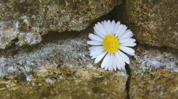 PoradyOgrodnicze.pl - Kamień, grys czy kora - co użyć do wykończenia ogrodu - zdjęcie główne