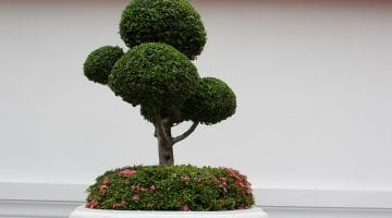 PoradyOgrodnicze.pl - Orient w ogrodzie- bonsai1