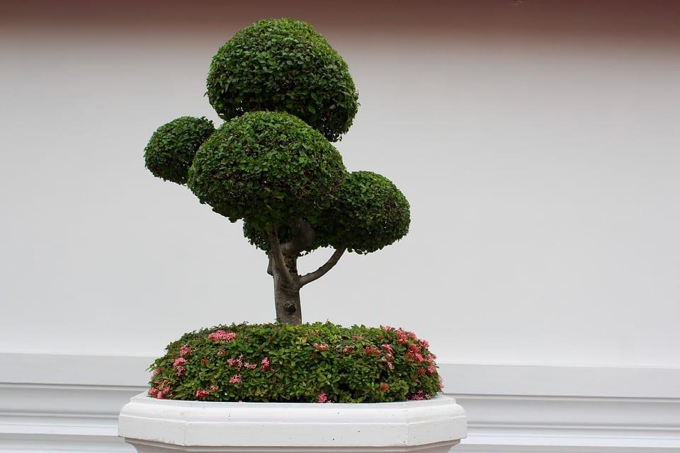 PoradyOgrodnicze.pl - Orient w ogrodzie - drzewka bonsai