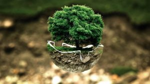 PoradyOgrodnicze.pl - Orient w ogrodach- bonsai2