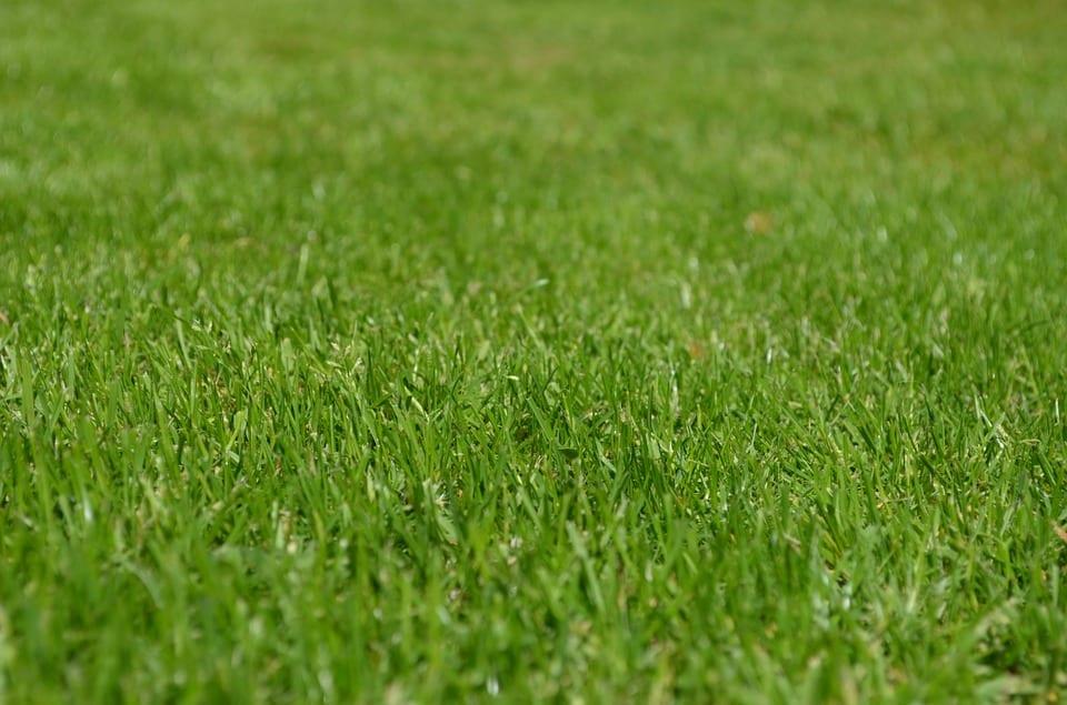 PoradyOgrodnicze.pl - Pielęgnacja trawnika latem - trawnik