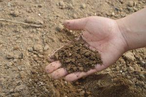 PoradyOgrodnicze.pl - Skuteczne zwalczanie mączniaków –gleba