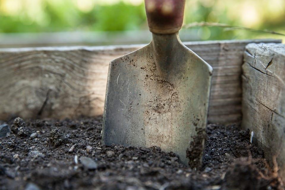 PoradyOgrodnicze.pl - Skuteczne zwalczanie mączniaków - prace ogrodowe