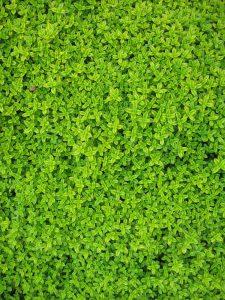 PoradyOgrodnicze.pl - ogrody wertykalne - rośliny do zielonej ściany