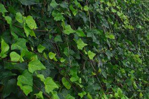 PoradyOgrodnicze.pl - ogrody wertykalne - zielona ściana