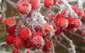 Poradyogrodnicze.pl rośliny atrakcyjne zimą