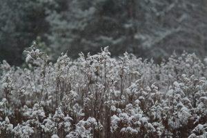 rośliny atrakcyjne zimą Poradyogrodnicze.pl