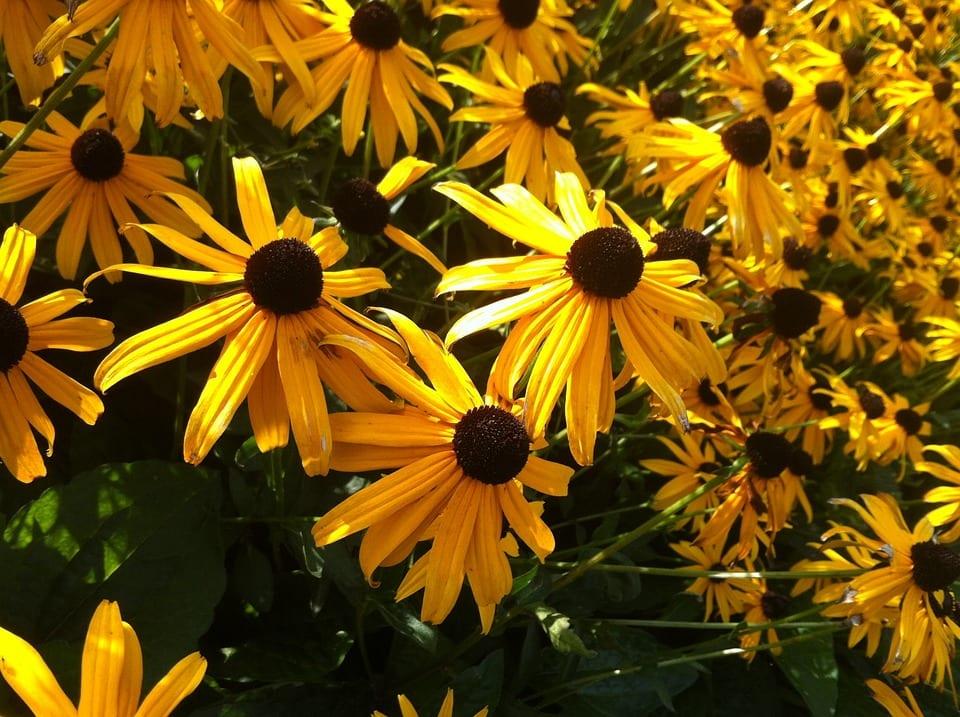 Rośliny kwitnące we wrześniu