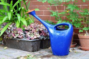 PoradyOgrodnicze.pl - Jak wykorzystać deszczówkę w ogrodzie - podlewanie deszczówką