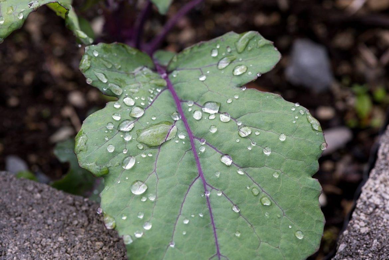 Jak wykorzystać deszczówkę w ogrodzie