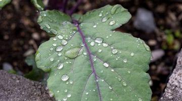 PoradyOgrodnicze.pl - Jak wykorzystać deszczówkę w ogrodzie - zdjęcie główne