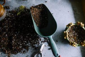 poradyogrodnicze-pl-jesienne-nawozenie-badanie-gleby