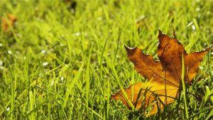 poradyogrodnicze-pl-zakladanie-trawnika-na-jesien-zakladanie-trawnika