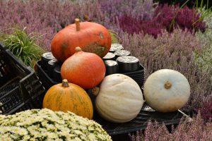 poradyogrodnicze-prace-ogrodowe-w-listopadzie-jesien-w-orodzie