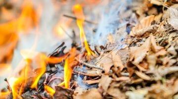 poradyogrodnicze-pl-czy-palenie-lisci-jest-zgodne-z-prawem-palone-liscie
