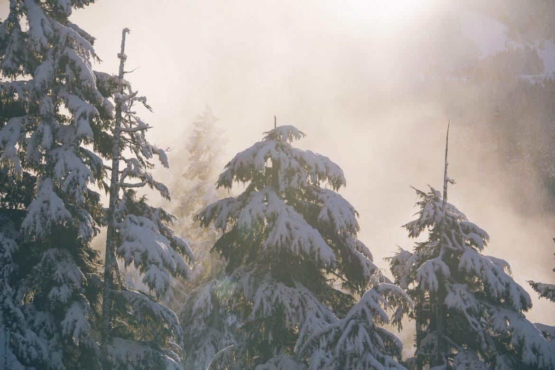 Ochrona iglaków zimą