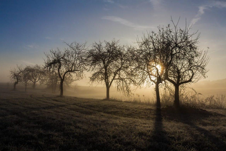 Oprysk drzew owocowych jesienią