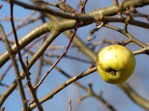 oprysk drzew owocowych jesienią poradyogrodnicze-pl-oprysk-drzew-owocowych-jesienia-jesien-jablko