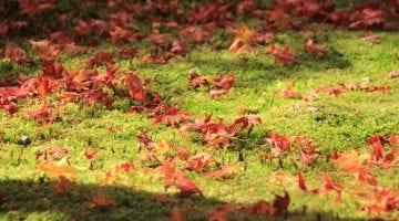 poradyogrodnicze-pl-przygotowanie-gleby-do-zimy-jesienna-gleba