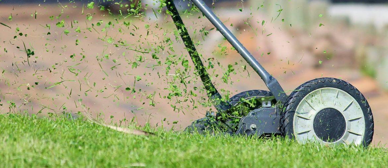 Zakładanie trawnika na jesieni