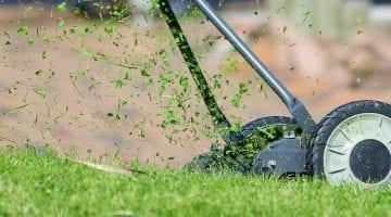 zakladanie trawnika jesienia