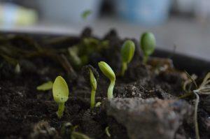 Jak poprawić jakość gleby w ogrodzie