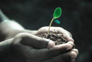 jak poprawić jakość gleby w ogrodzie - porady ogrodnicze
