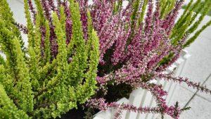 porady ogrodnicze jesienne kompozycje