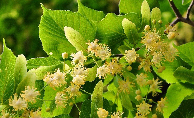 Rośliny kwitnące w czerwcu