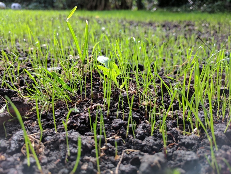zakładanie trawnika jesienią